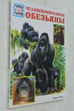 Человекообразные обезьяны.